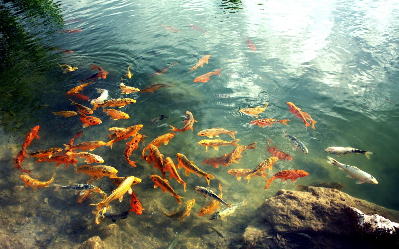 Картинки водоемы рыбы